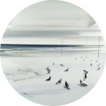«Περιστέρια στην ακτή» Ι Λάδι σε μουσαμά, διάμετρος 61εκ. (2008)